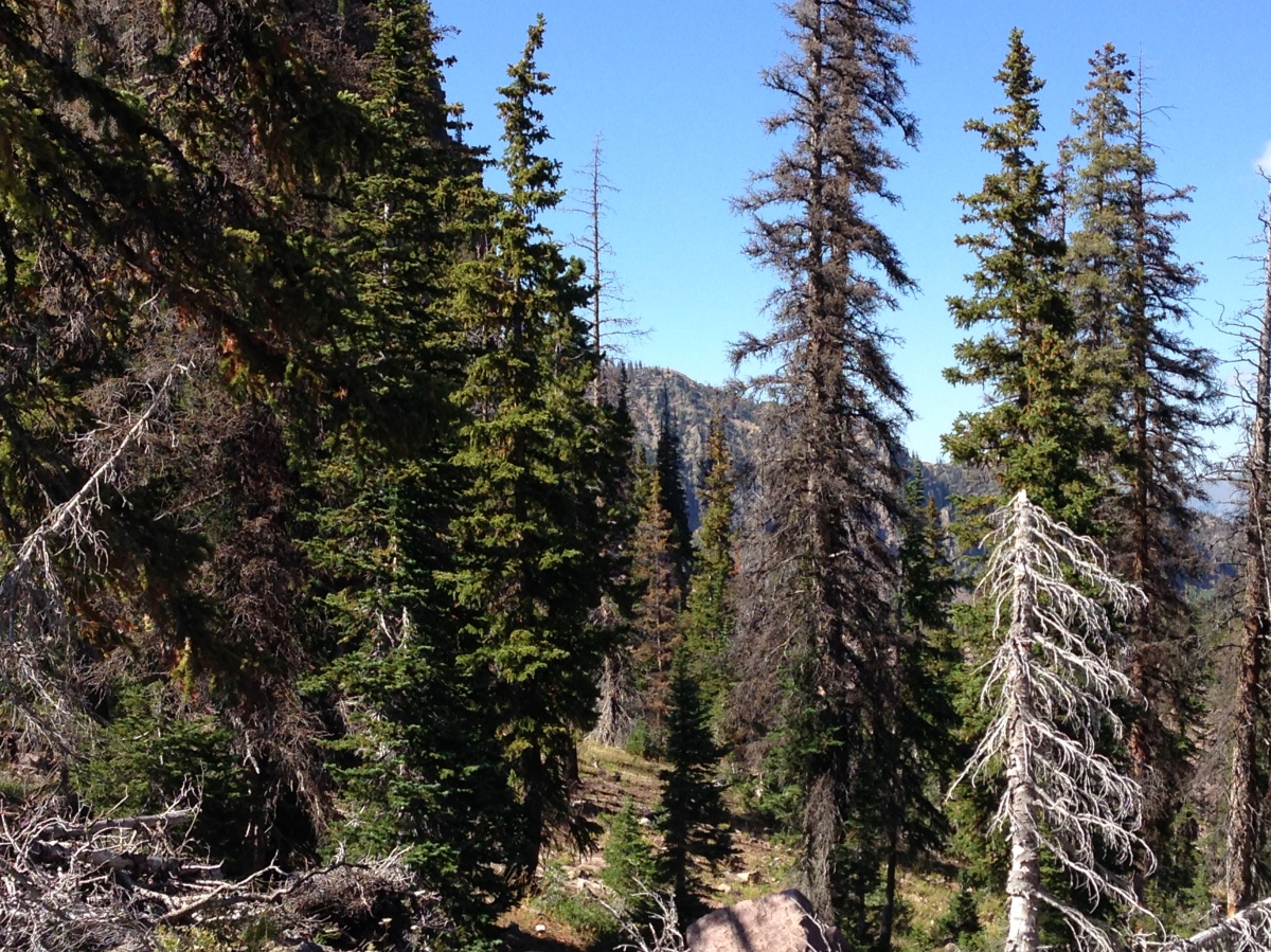 Two Miles High: A Rocky Mountain Tail: Chapter Four