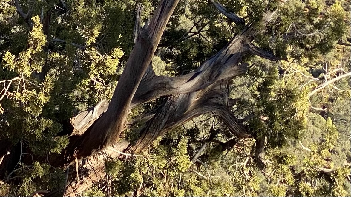Sedona Wilderness